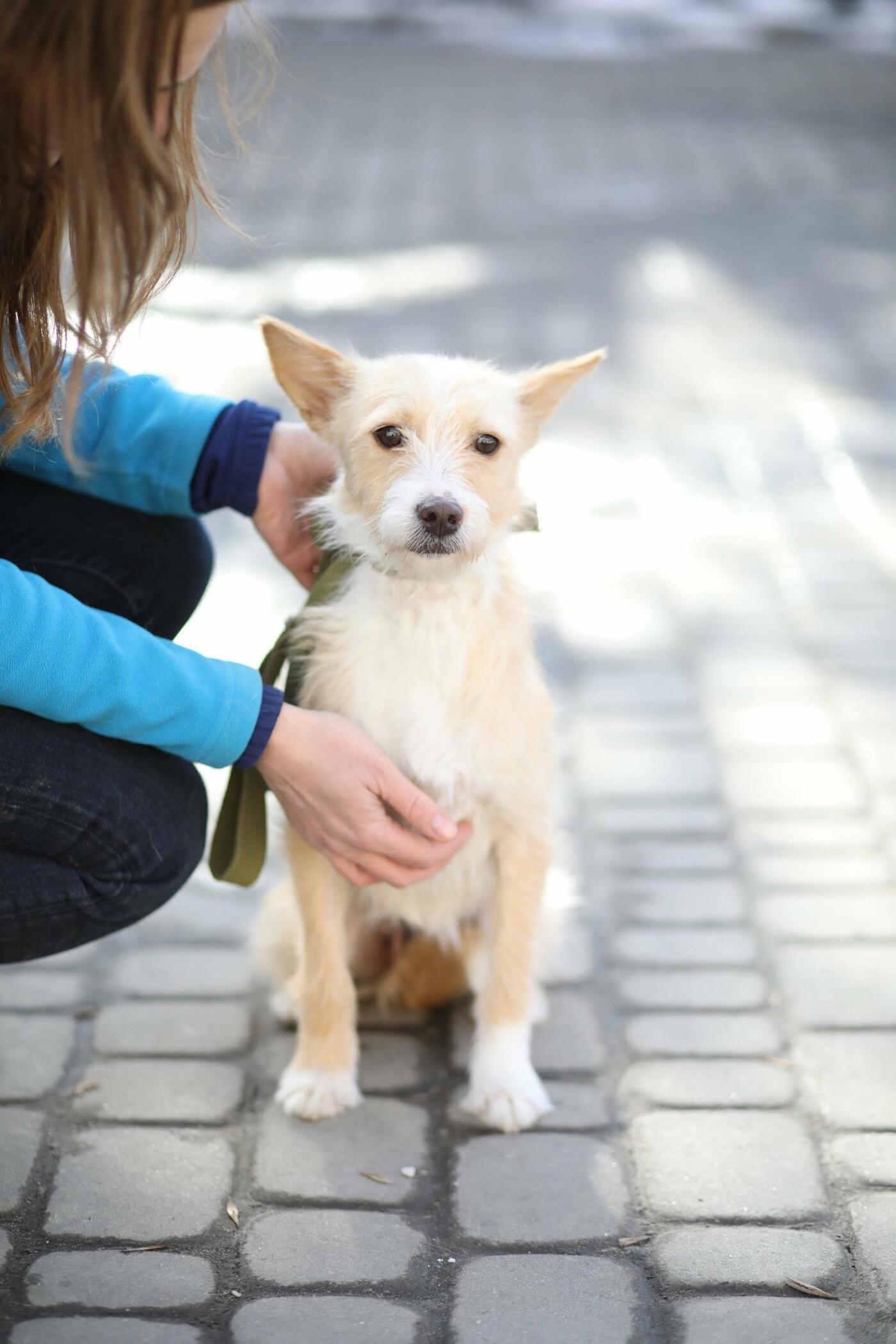 Обери собі друга: 12 неймовірно красивих собак, які шукають нову домівку у Львові. ФОТО, фото-12