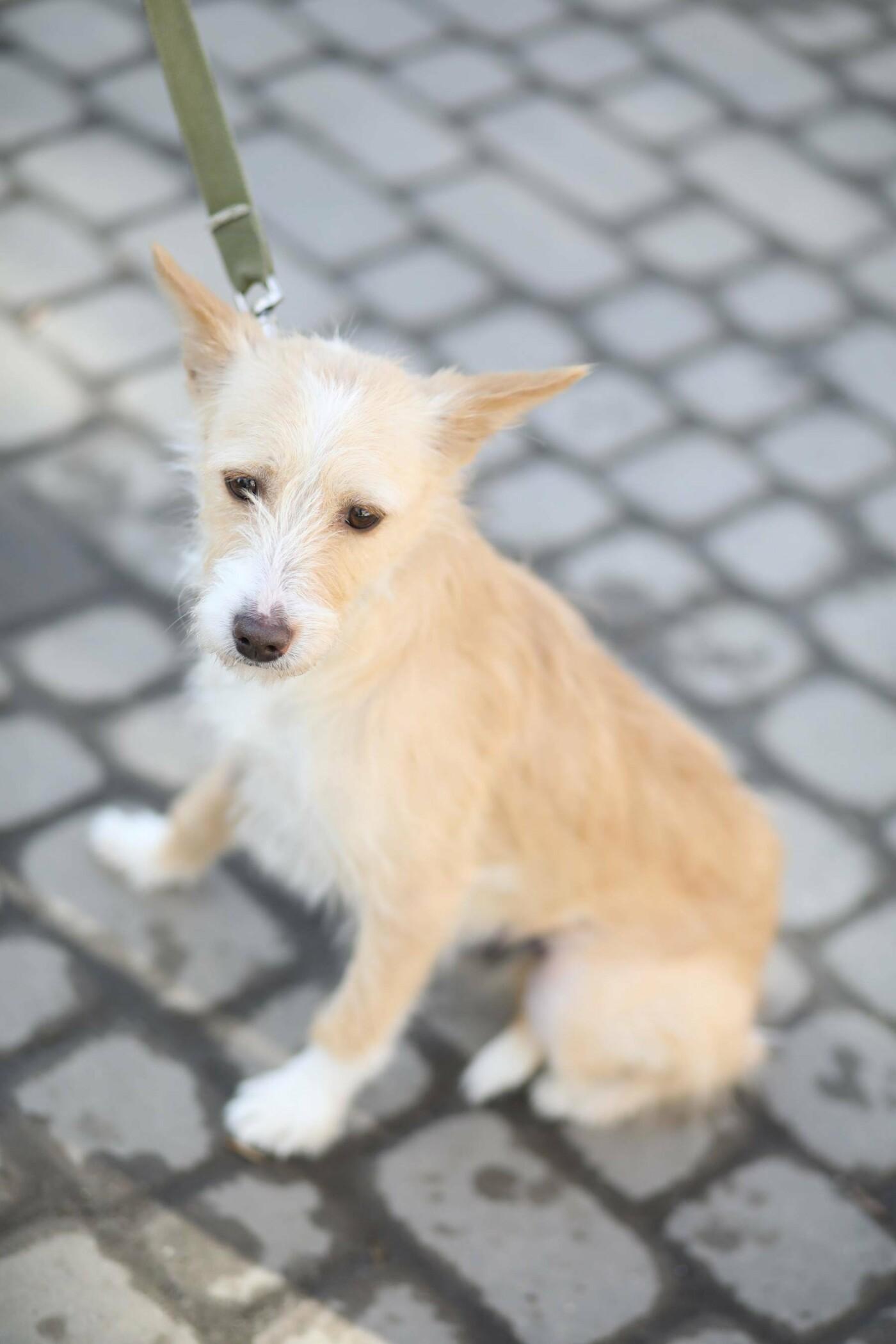 Обери собі друга: 12 неймовірно красивих собак, які шукають нову домівку у Львові. ФОТО, фото-11
