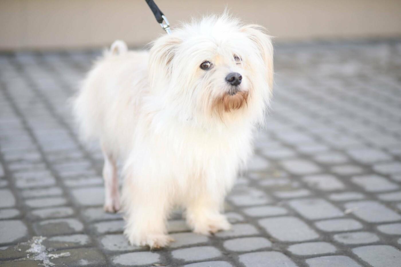 Обери собі друга: 12 неймовірно красивих собак, які шукають нову домівку у Львові. ФОТО, фото-2