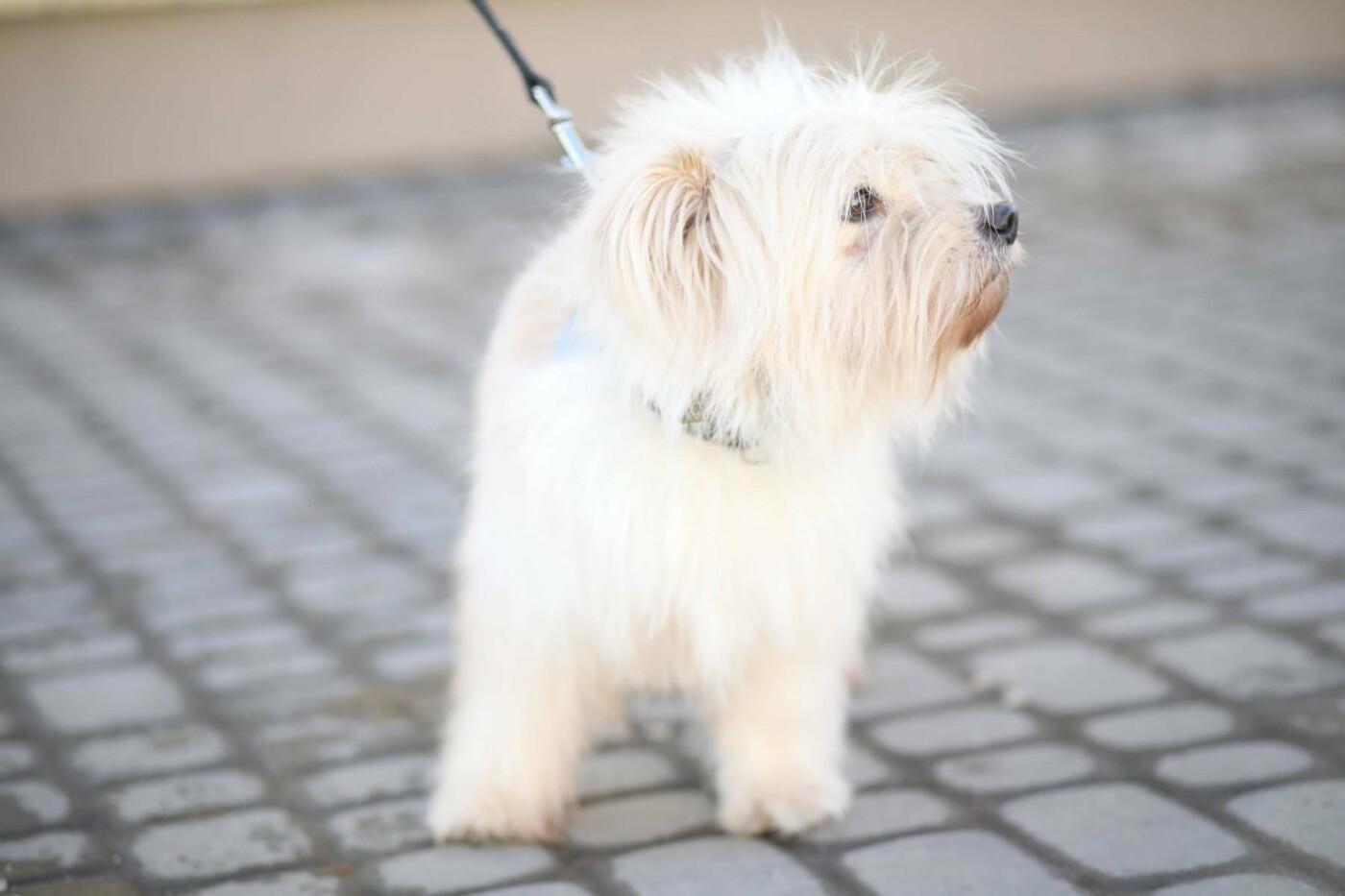 Обери собі друга: 12 неймовірно красивих собак, які шукають нову домівку у Львові. ФОТО, фото-1