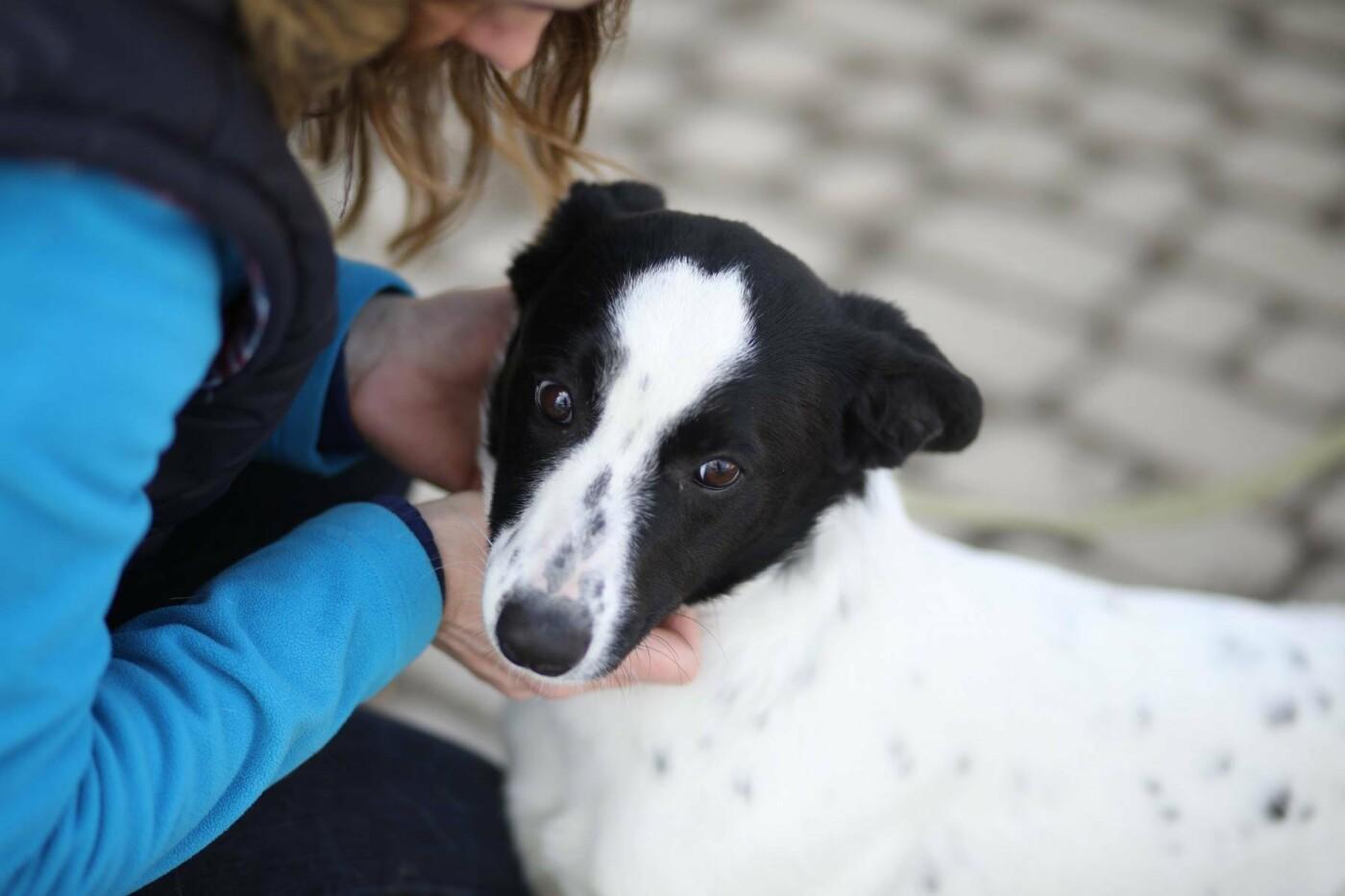Обери собі друга: 12 неймовірно красивих собак, які шукають нову домівку у Львові. ФОТО, фото-13