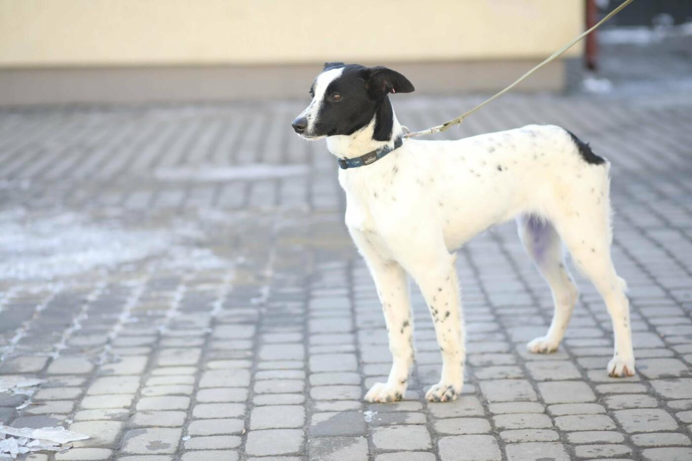 Обери собі друга: 12 неймовірно красивих собак, які шукають нову домівку у Львові. ФОТО, фото-14