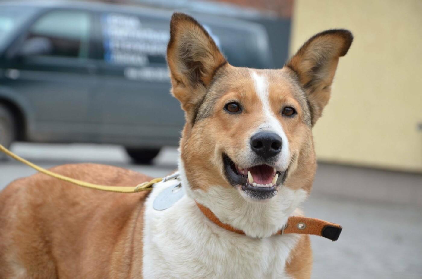 Обери собі друга: 12 неймовірно красивих собак, які шукають нову домівку у Львові. ФОТО, фото-7