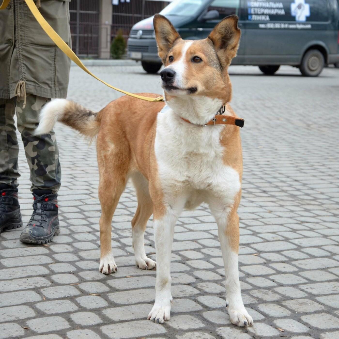 Обери собі друга: 12 неймовірно красивих собак, які шукають нову домівку у Львові. ФОТО, фото-8