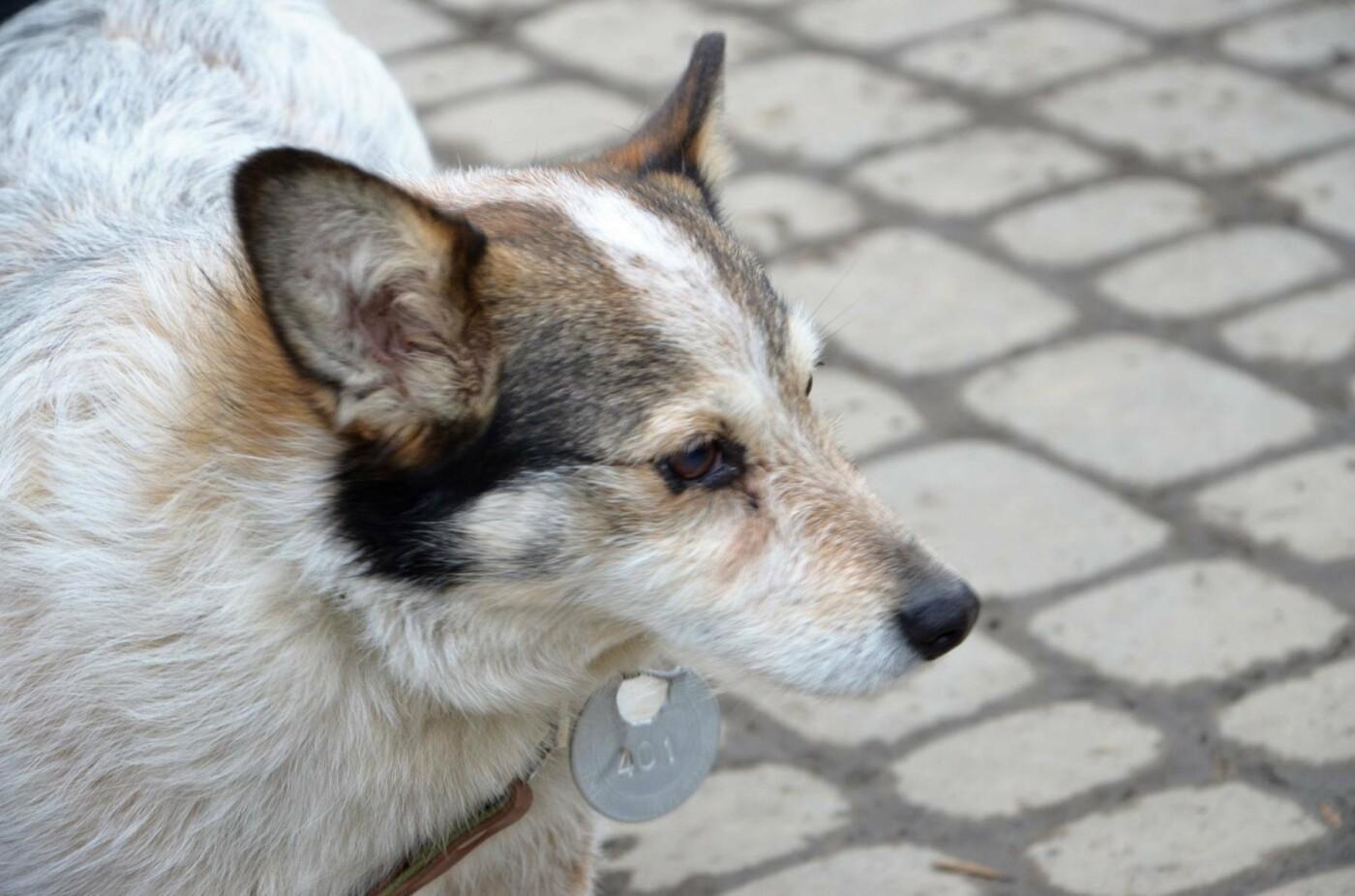 Обери собі друга: 12 неймовірно красивих собак, які шукають нову домівку у Львові. ФОТО, фото-6