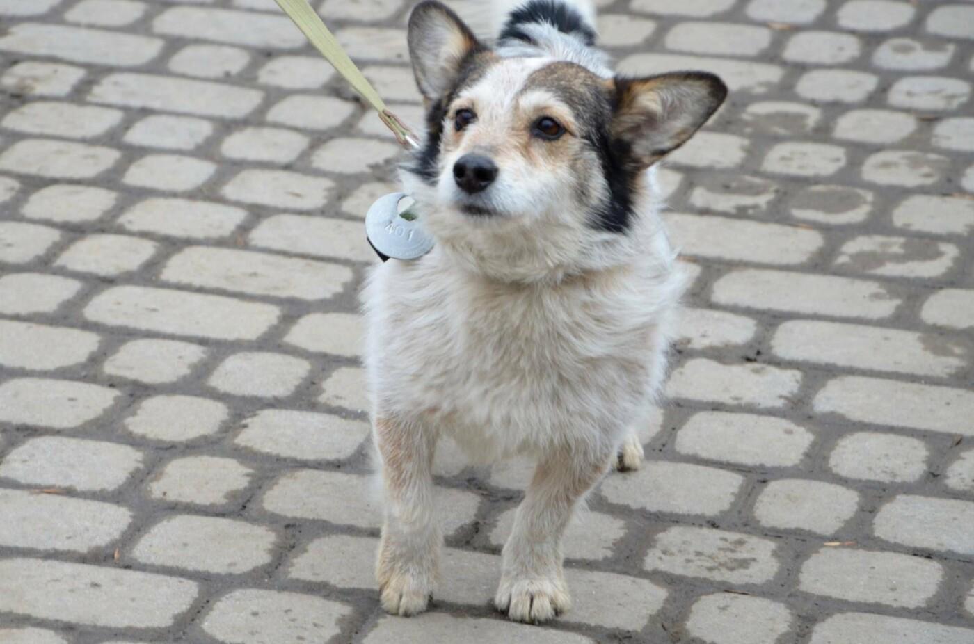 Обери собі друга: 12 неймовірно красивих собак, які шукають нову домівку у Львові. ФОТО, фото-5