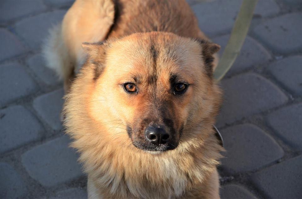 Обери собі друга: 12 неймовірно красивих собак, які шукають нову домівку у Львові. ФОТО, фото-19