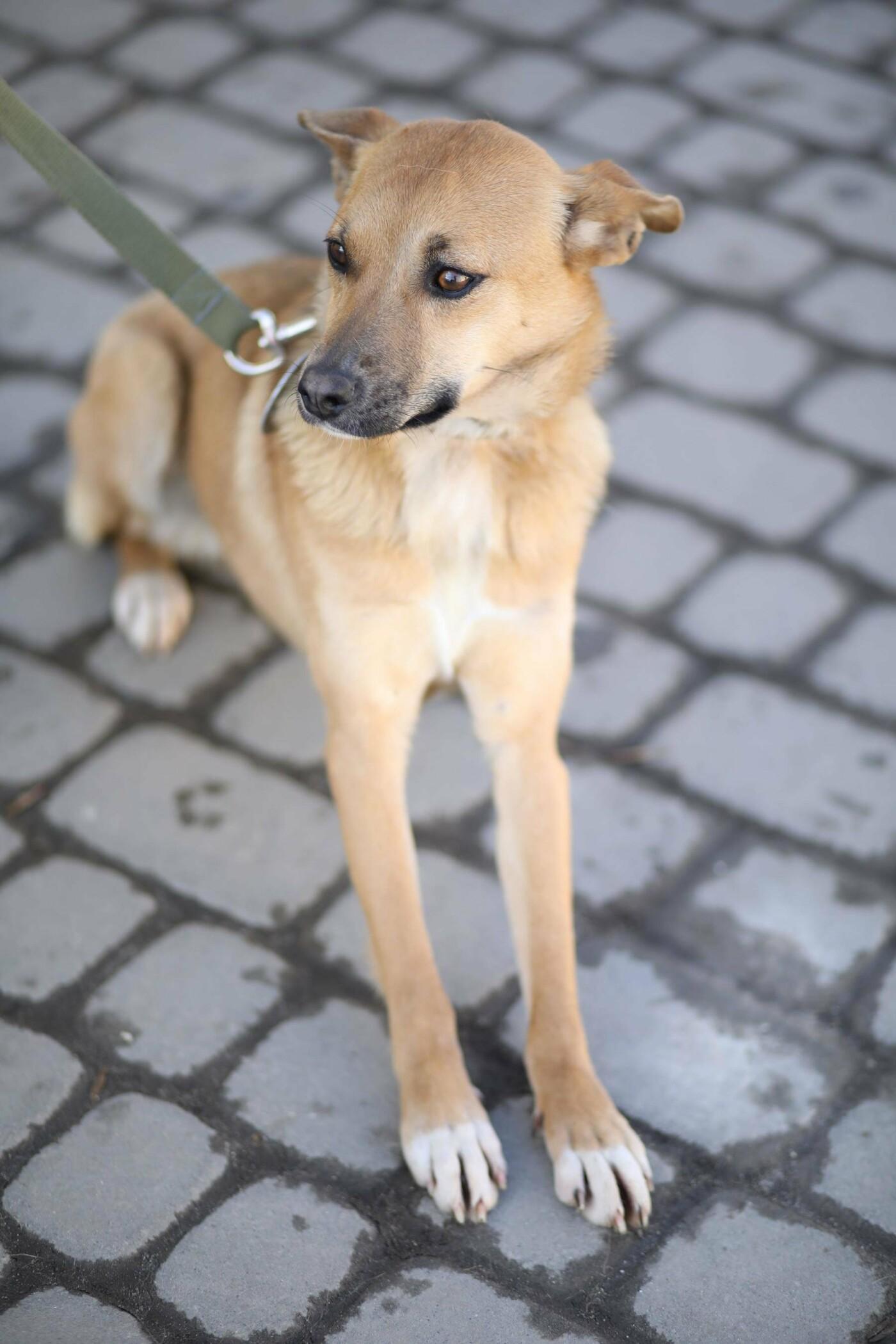 Обери собі друга: 12 неймовірно красивих собак, які шукають нову домівку у Львові. ФОТО, фото-16