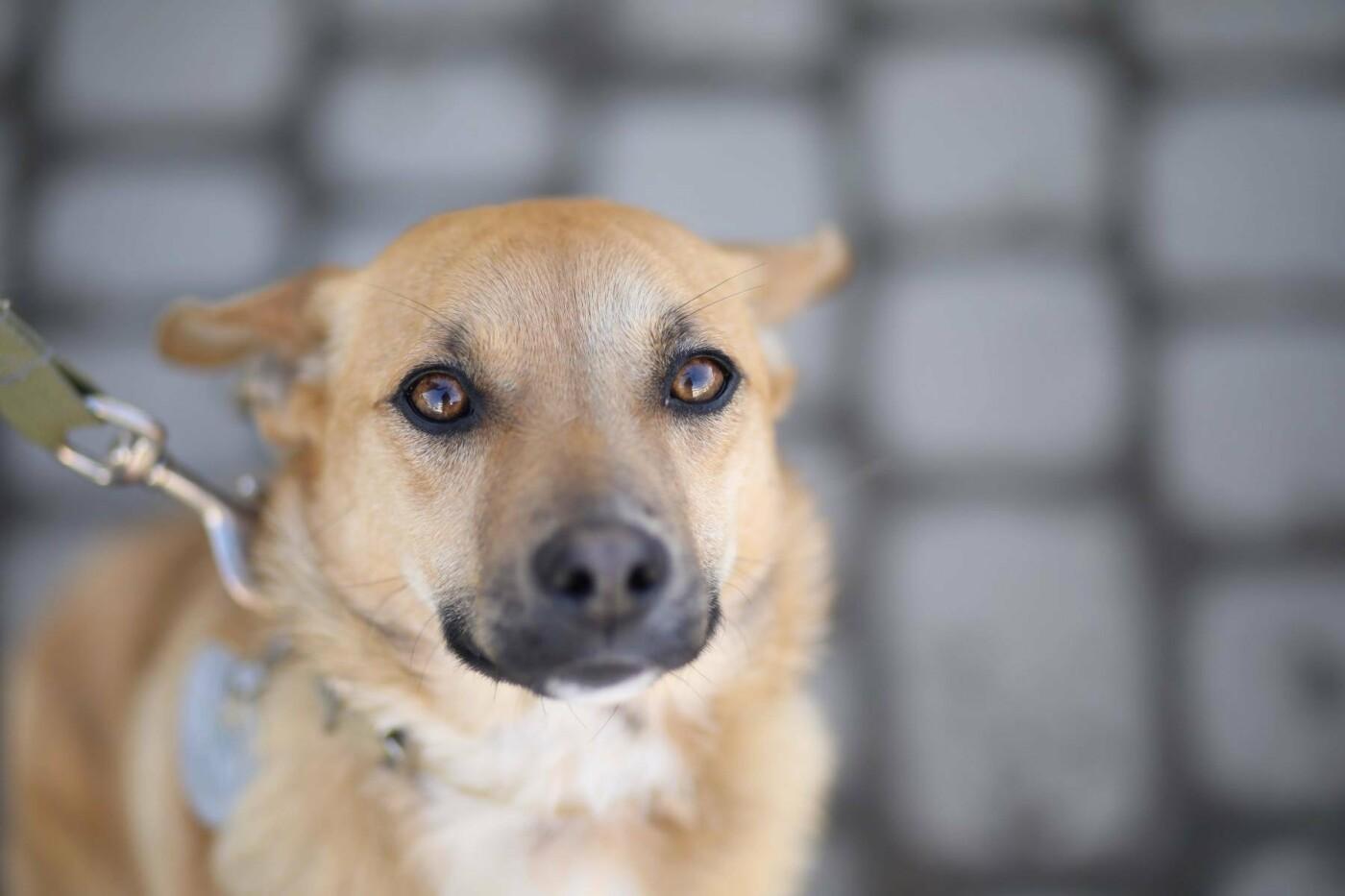Обери собі друга: 12 неймовірно красивих собак, які шукають нову домівку у Львові. ФОТО, фото-15