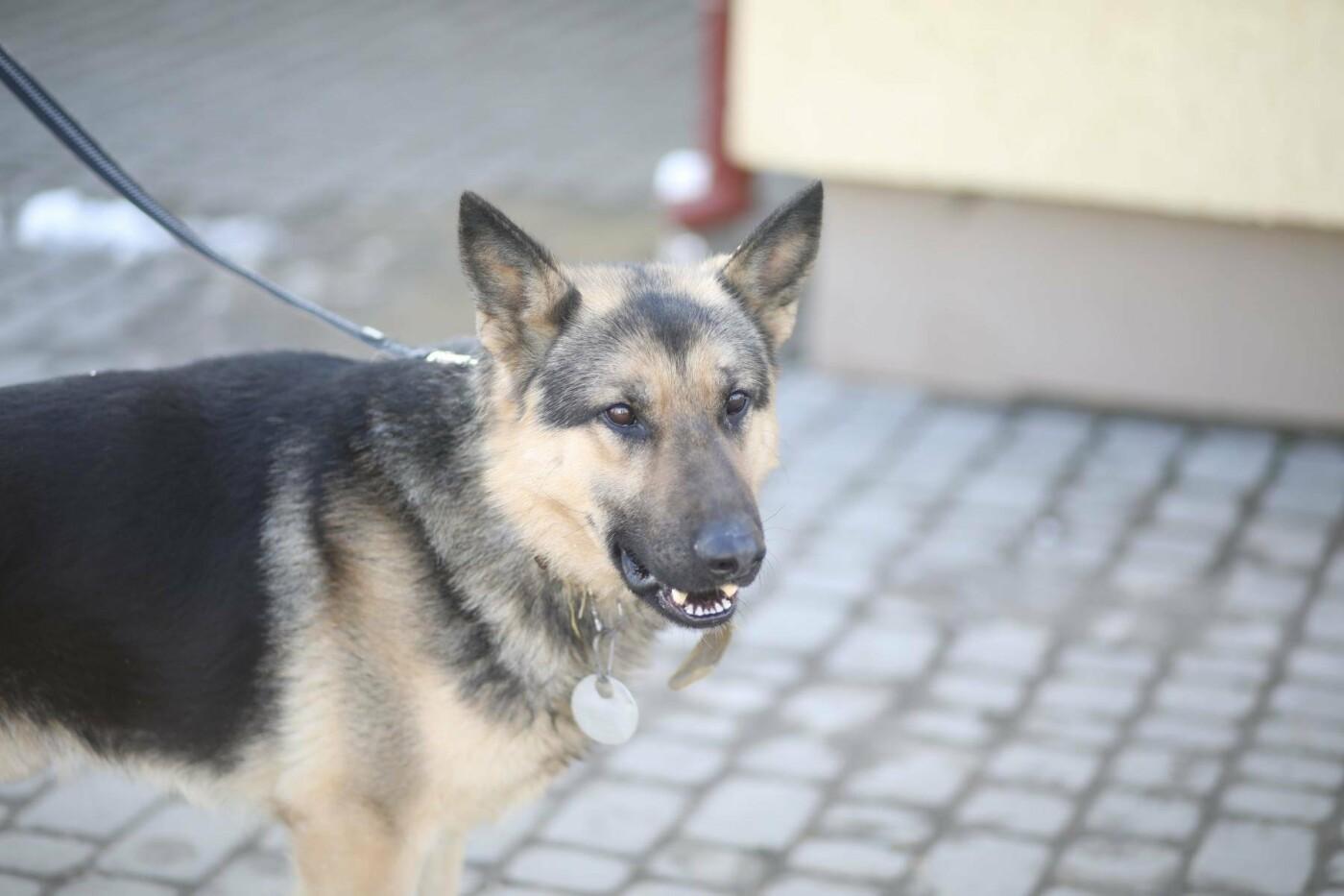 Обери собі друга: 12 неймовірно красивих собак, які шукають нову домівку у Львові. ФОТО, фото-21