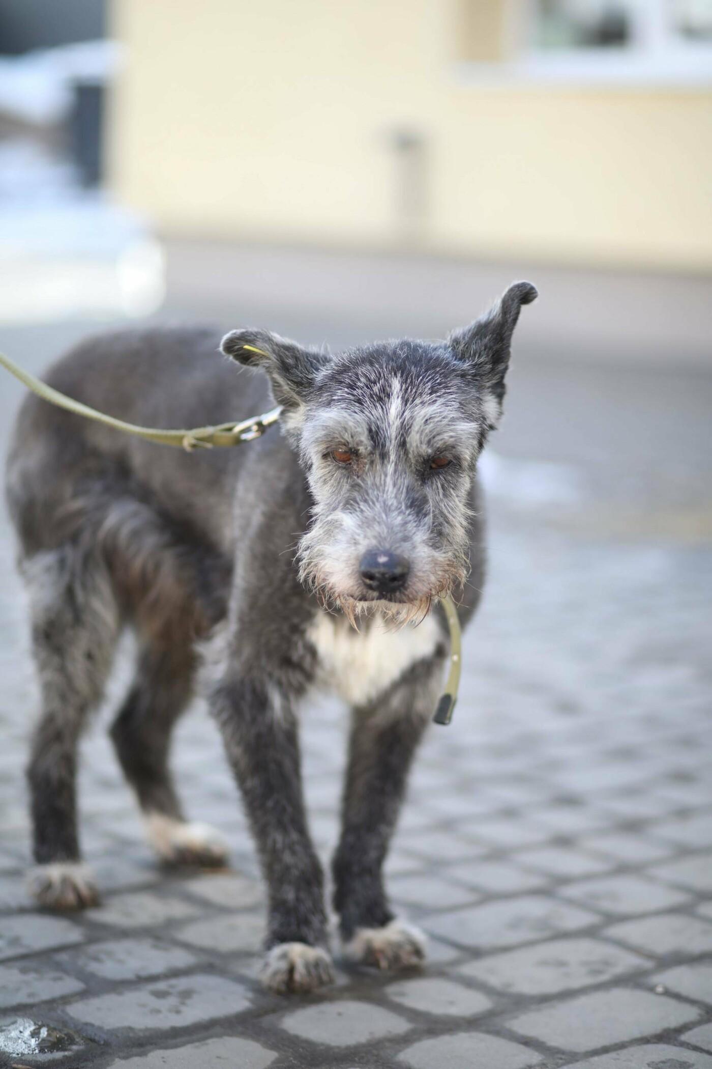 Обери собі друга: 12 неймовірно красивих собак, які шукають нову домівку у Львові. ФОТО, фото-17