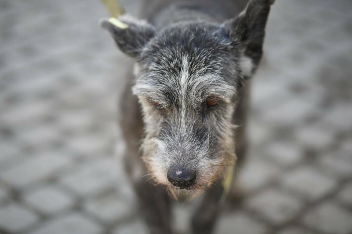 Обери собі друга: 12 неймовірно красивих собак, які шукають нову домівку у Львові. ФОТО, фото-18