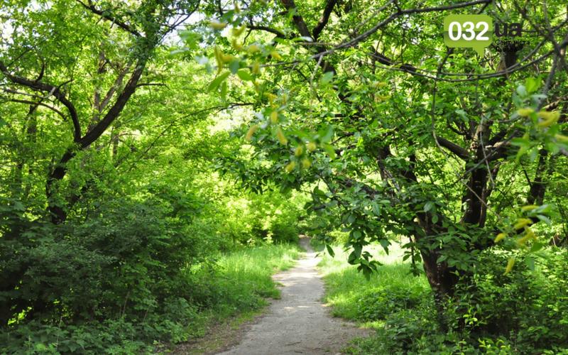Як виглядає Замарстинівський парк у Львові: очікування - реальність, - ФОТО, фото-35