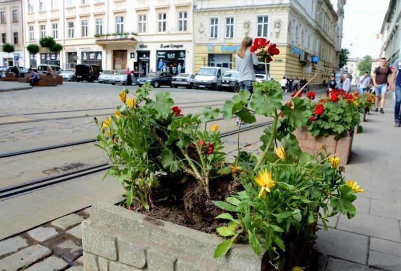 Двоє іноземців у Львові понищили клумби біля Катедри, - ВІДЕО, фото-1