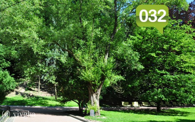 10 місць у Стрийському парку, які має побачити кожен, фото-8