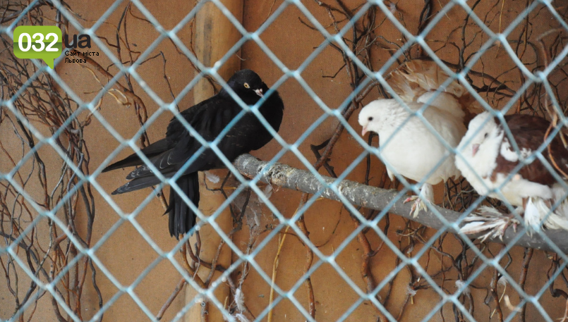 """Тварини із зоокутка в парку """"Знесіння"""" потребують допомоги львів'ян, - ФОТО, фото-6"""