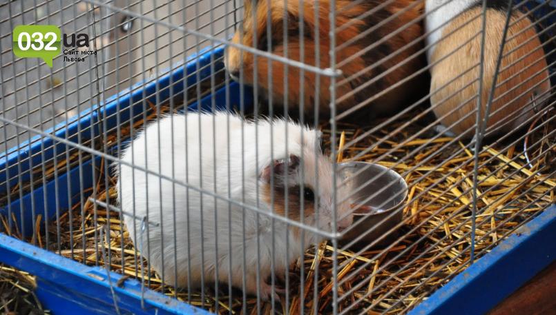 """Тварини із зоокутка в парку """"Знесіння"""" потребують допомоги львів'ян, - ФОТО, фото-15"""