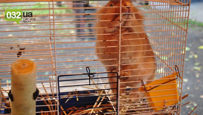 """Тварини із зоокутка в парку """"Знесіння"""" потребують допомоги львів'ян, - ФОТО, фото-12"""