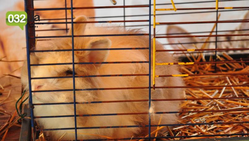 """Тварини із зоокутка в парку """"Знесіння"""" потребують допомоги львів'ян, - ФОТО, фото-13"""