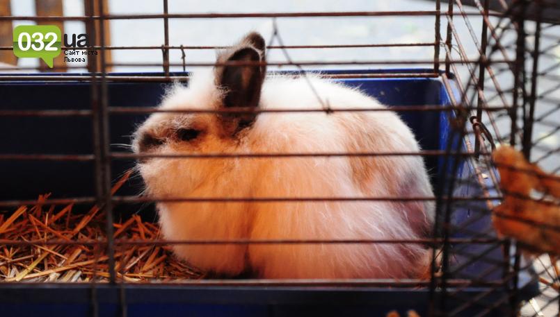 """Тварини із зоокутка в парку """"Знесіння"""" потребують допомоги львів'ян, - ФОТО, фото-11"""