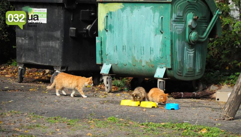 """Тварини із зоокутка в парку """"Знесіння"""" потребують допомоги львів'ян, - ФОТО, фото-4"""
