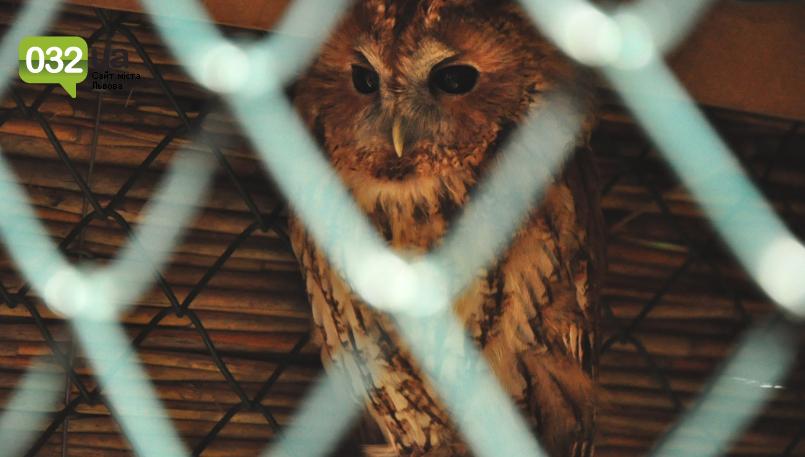 """Тварини із зоокутка в парку """"Знесіння"""" потребують допомоги львів'ян, - ФОТО, фото-16"""