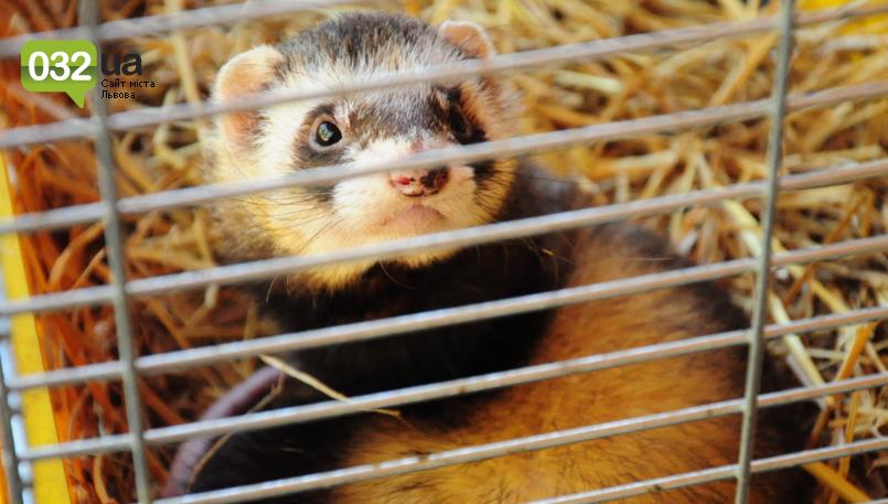 """Тварини із зоокутка в парку """"Знесіння"""" потребують допомоги львів'ян, - ФОТО, фото-14"""