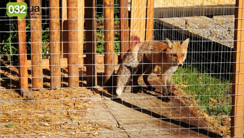 """Тварини із зоокутка в парку """"Знесіння"""" потребують допомоги львів'ян, - ФОТО, фото-1"""