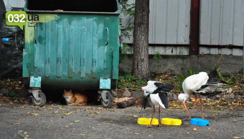 """Тварини із зоокутка в парку """"Знесіння"""" потребують допомоги львів'ян, - ФОТО, фото-3"""