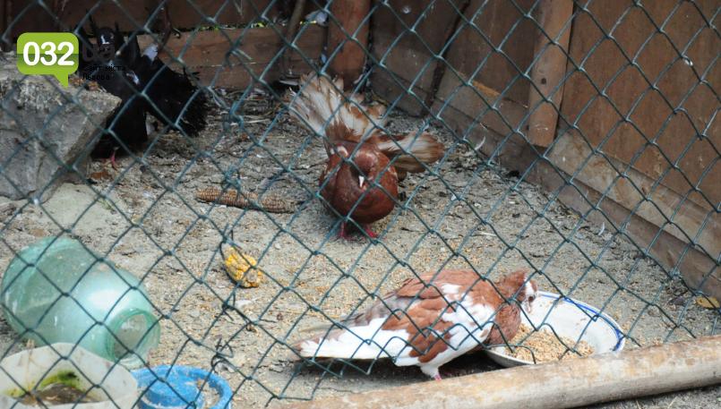 """Тварини із зоокутка в парку """"Знесіння"""" потребують допомоги львів'ян, - ФОТО, фото-5"""