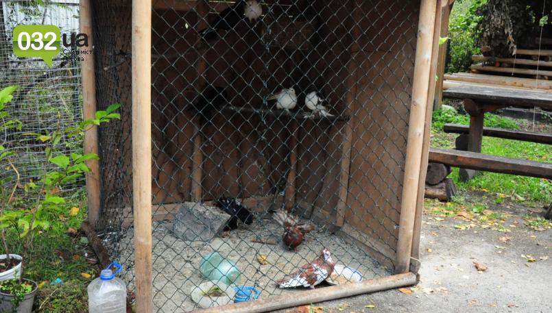 """Тварини із зоокутка в парку """"Знесіння"""" потребують допомоги львів'ян, - ФОТО, фото-7"""