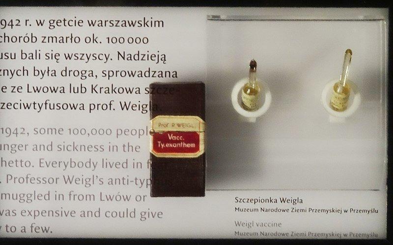 Рудольф Вайгль: творець вакцини проти висипного тифу, що врятував мільйони, фото-5
