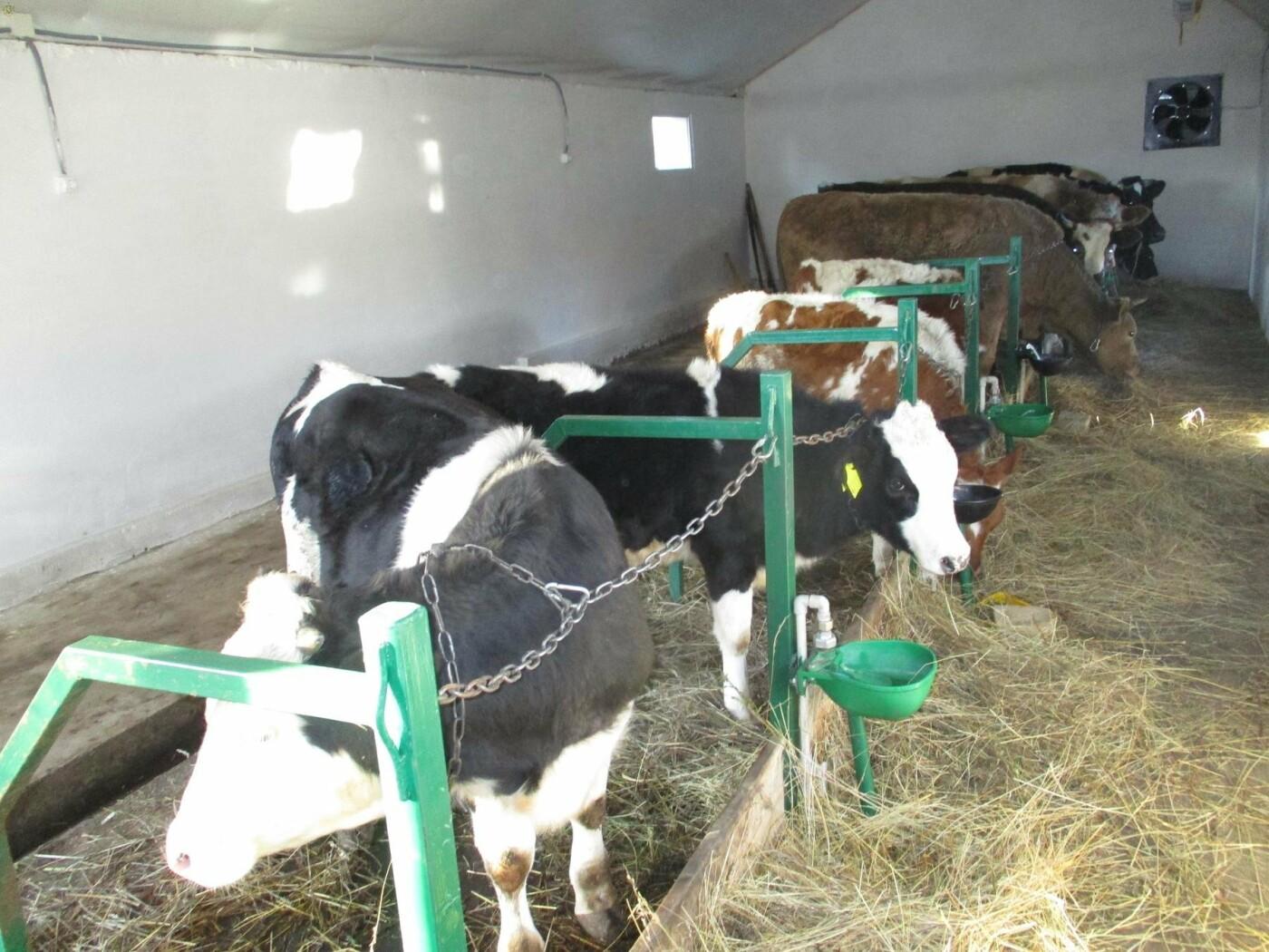 На Мостищині відкрили сімейну ферму, - ФОТО, фото-1