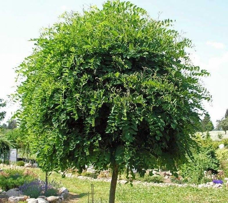 На Підзамче планують висадити нові дерева, - ФОТО, фото-1