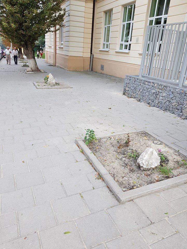 На Підзамче планують висадити нові дерева, - ФОТО, фото-2