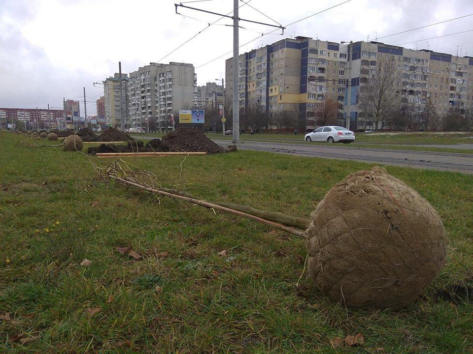 Вздовж трамвайної колії на Сихові висадили платани та тюльпанові дерева, - ФОТО, фото-2, Фото: Alexander Shutyuck/Facebook.com та ЛМР