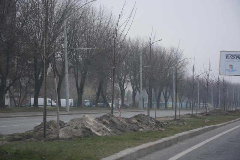 Вздовж трамвайної колії на Сихові висадили платани та тюльпанові дерева, - ФОТО, фото-3, Фото: Alexander Shutyuck/Facebook.com та ЛМР