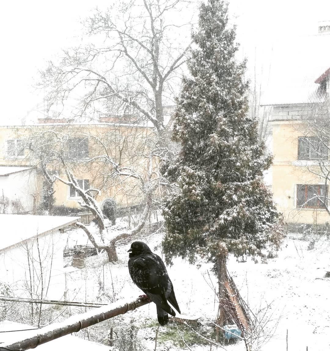 Перший сніг випав у Львові, - ФОТО, фото-1