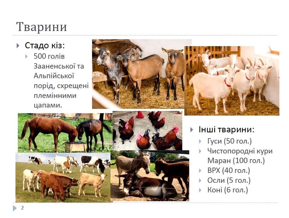 На Львівщині бельгієць продає відому козину ферму, фото-2