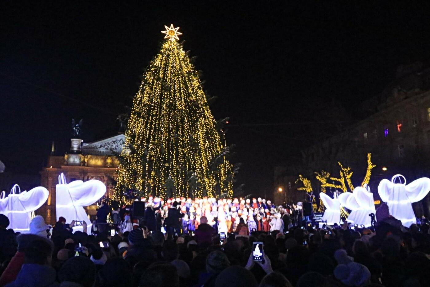 Якою буде головна новорічна ялинка Львова, фото-1