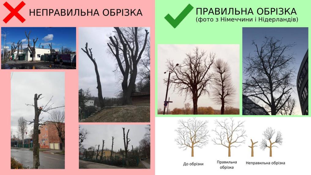 У Львові зареєстрували петицію щодо правильної обрізки дерев, фото-1
