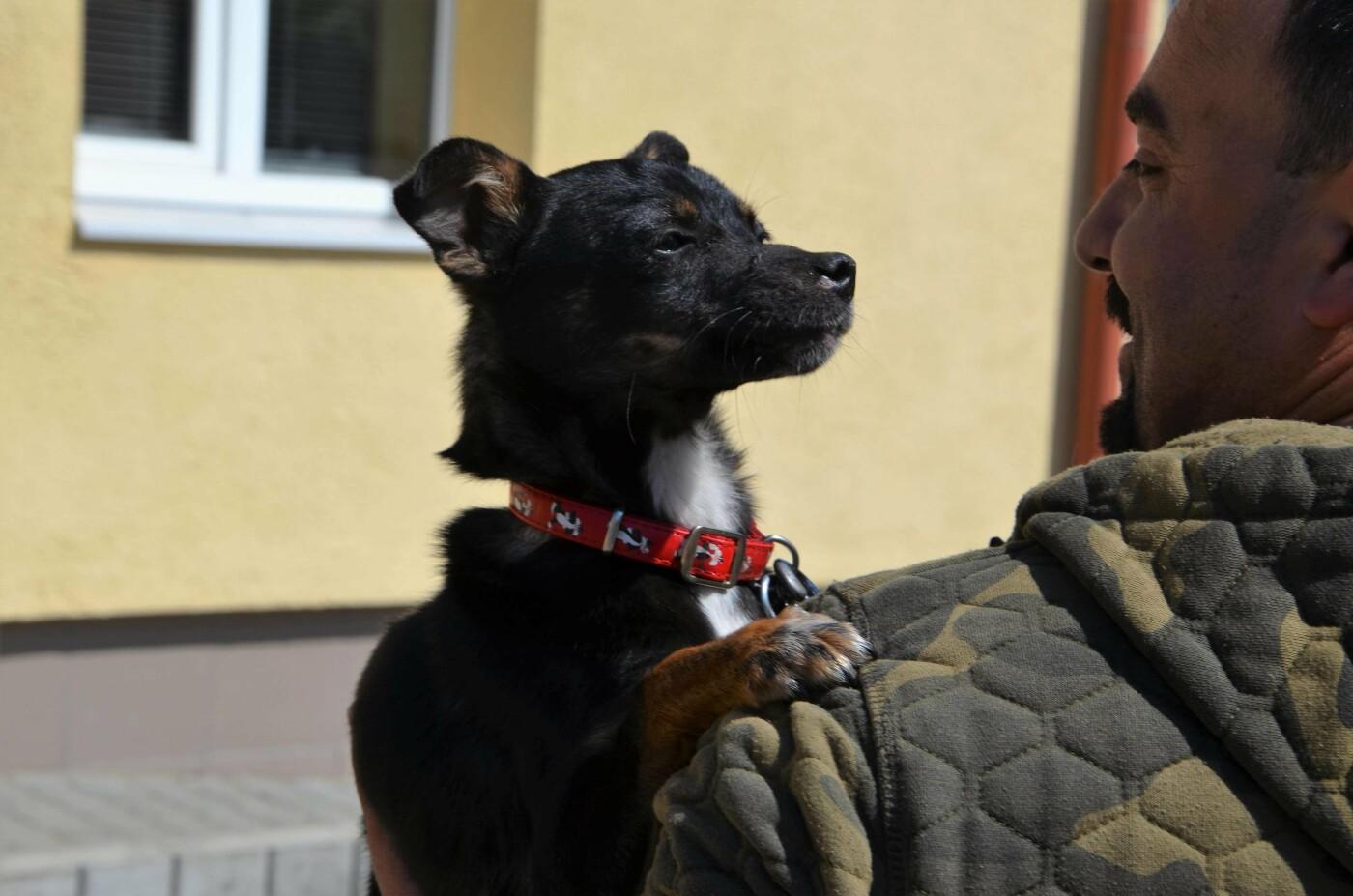 """10 чарівних собачок чекають на добрих господарів у ЛКП """"Лев"""", - ФОТО, фото-4"""
