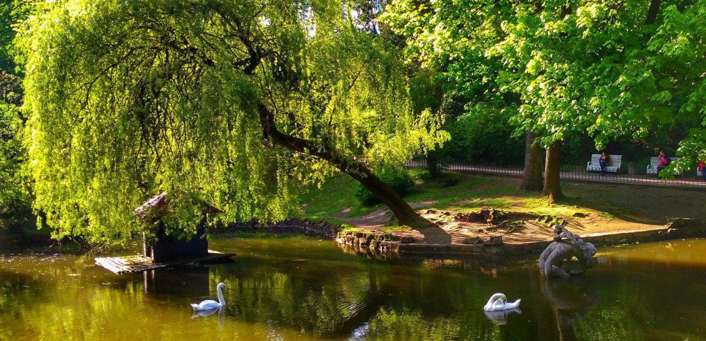 Де розважитись у Львові просто неба ‒ добірка безкоштовних місць і просторів, фото-3