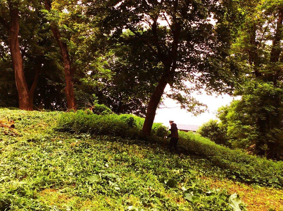 У Поморянському замку розібрали завали та облагороджують територію, - ФОТО, фото-1