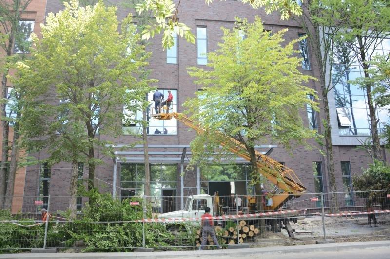 Забудовник, який зрізав 12 дерев на вулиці Угорській у Львові, висадить нові насадження, фото-1