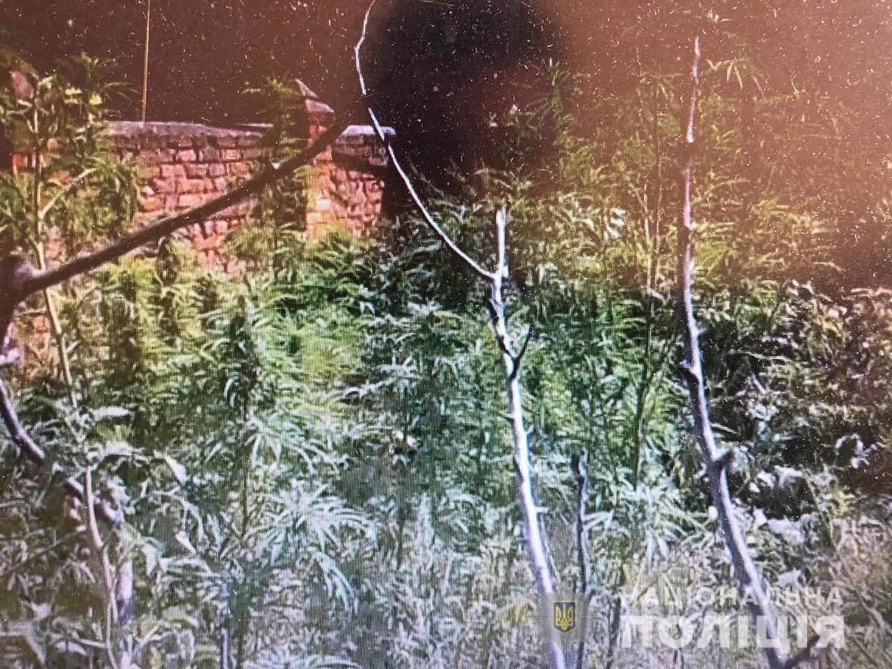 На Львівщині 40-річний чоловік незаконно вирощував рослини коноплі, - ФОТО, фото-2