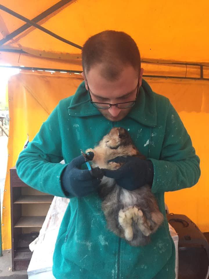 Фото: Домівка врятованих тварин, фейсбук