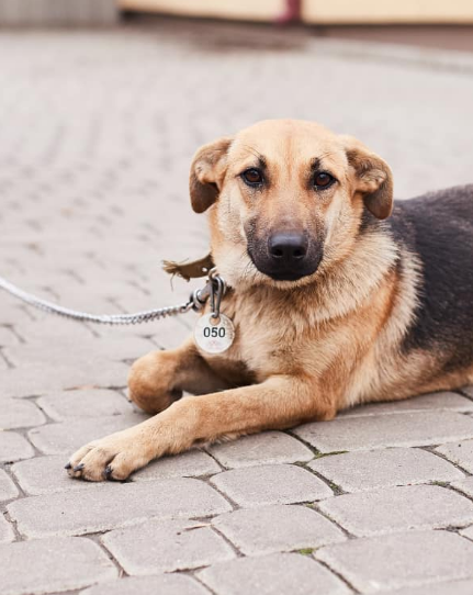 """У львівській ветеринарній клініці """"Лев"""" з'явились нові хвостаті улюбленці, які шукають друзів, господарів та дім, - ФОТО, фото-3"""