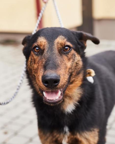 """У львівській ветеринарній клініці """"Лев"""" з'явились нові хвостаті улюбленці, які шукають друзів, господарів та дім, - ФОТО, фото-9"""