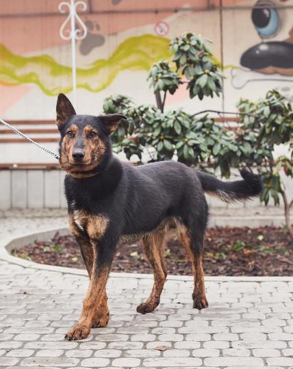 """У львівській ветеринарній клініці """"Лев"""" з'явились нові хвостаті улюбленці, які шукають друзів, господарів та дім, - ФОТО, фото-10"""
